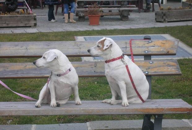 Realizzate due nuove aree sgambamento cani