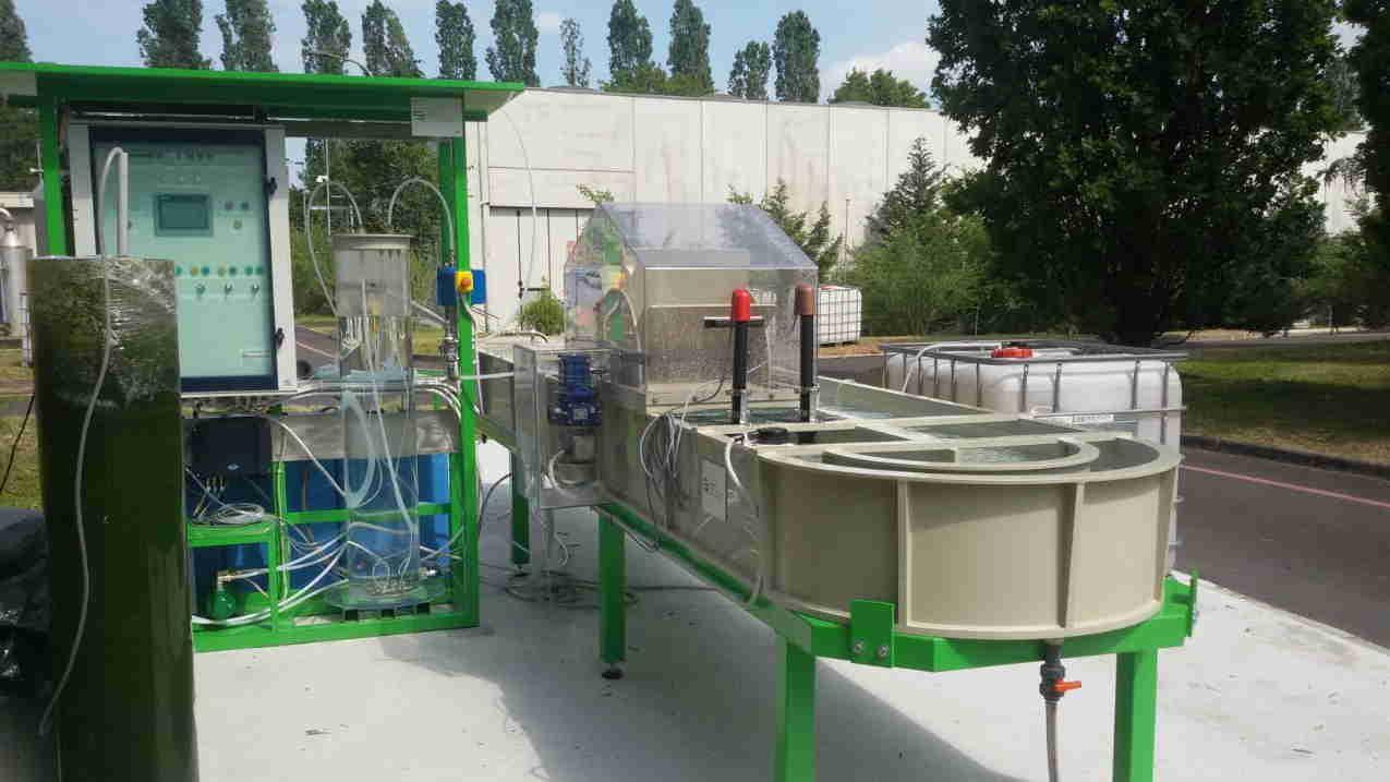 Alghe nel processo di depurazione per renderlo più efficiente, economico e sostenibile