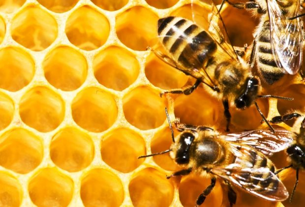 Bene la cura di miele e propoli: + 22% le imprese in cinque anni in Lombardia