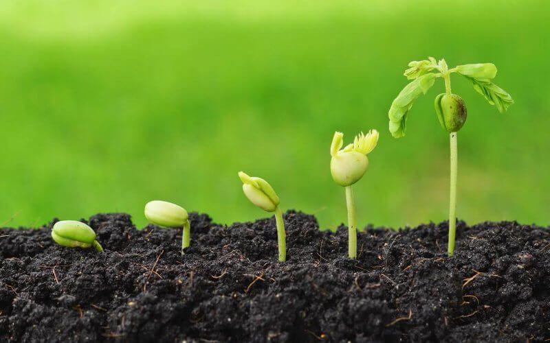 Agricoltura, i trend in Lombardia tra la ricerca di salute e benessere