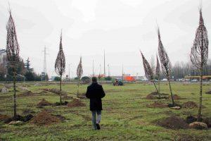 La porta verde di Segrate: piantati 85 alberi nel terreno tra via Cervi e la Cassanese