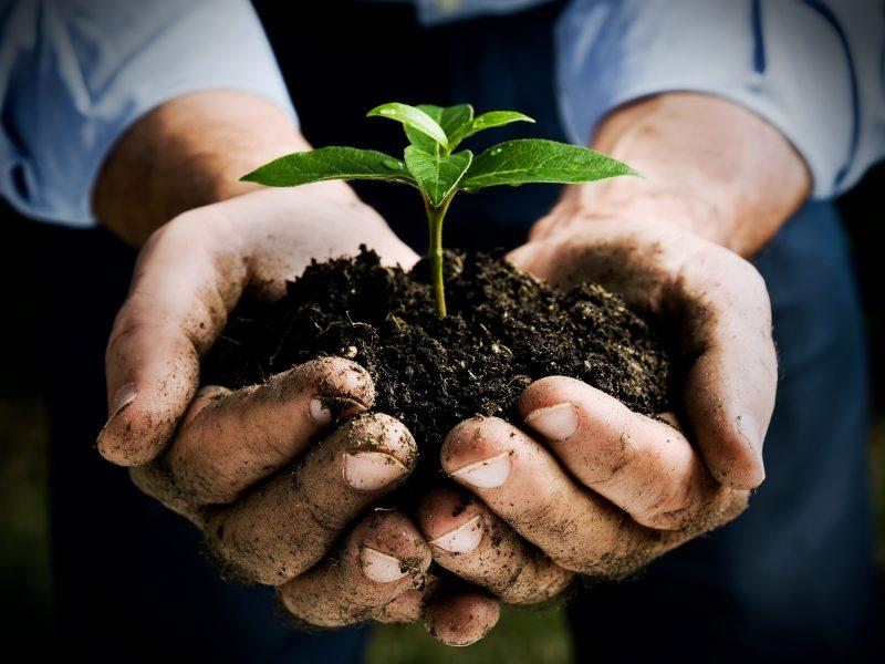 Agricoltura lombarda, i nuovi trend: boom per piante tessili, frutta e riso