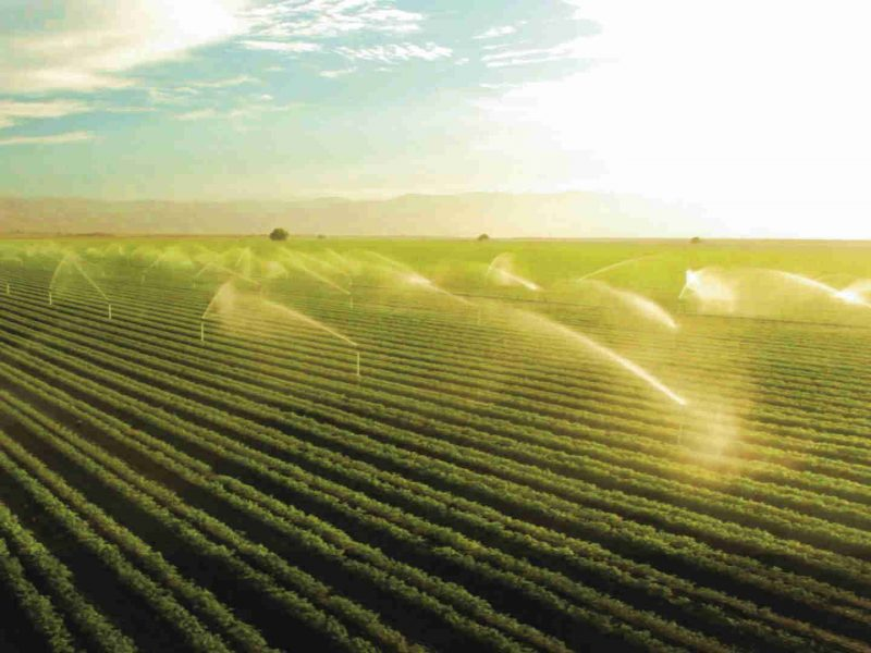 Agricoltura lombarda: i nuovi trend premiano frutta, ortaggi, olio, miele, fiori e piante