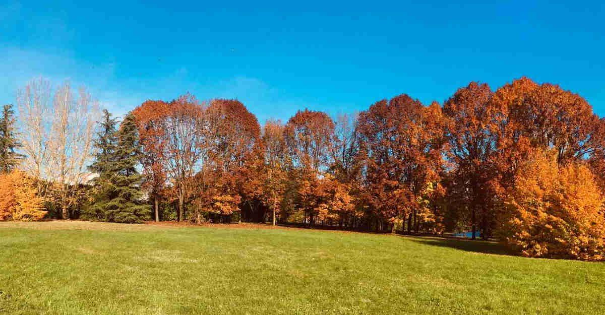 Un albero per ogni Segratese: in arrivo 36.000 nuove piante