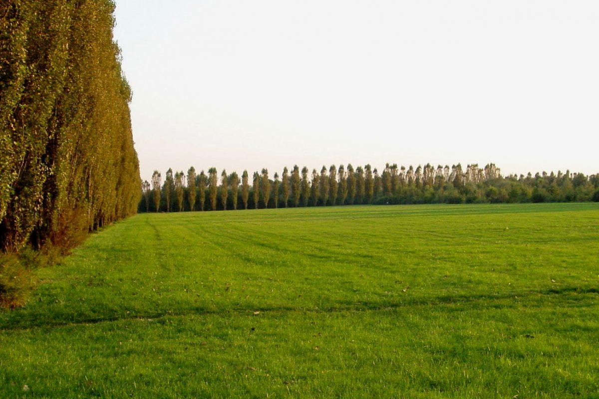 La primavera arriva e con lei la speranza e l'impegno contro il Coronavirus di Parco Agricolo Sud Milano e Parco Nord Milano